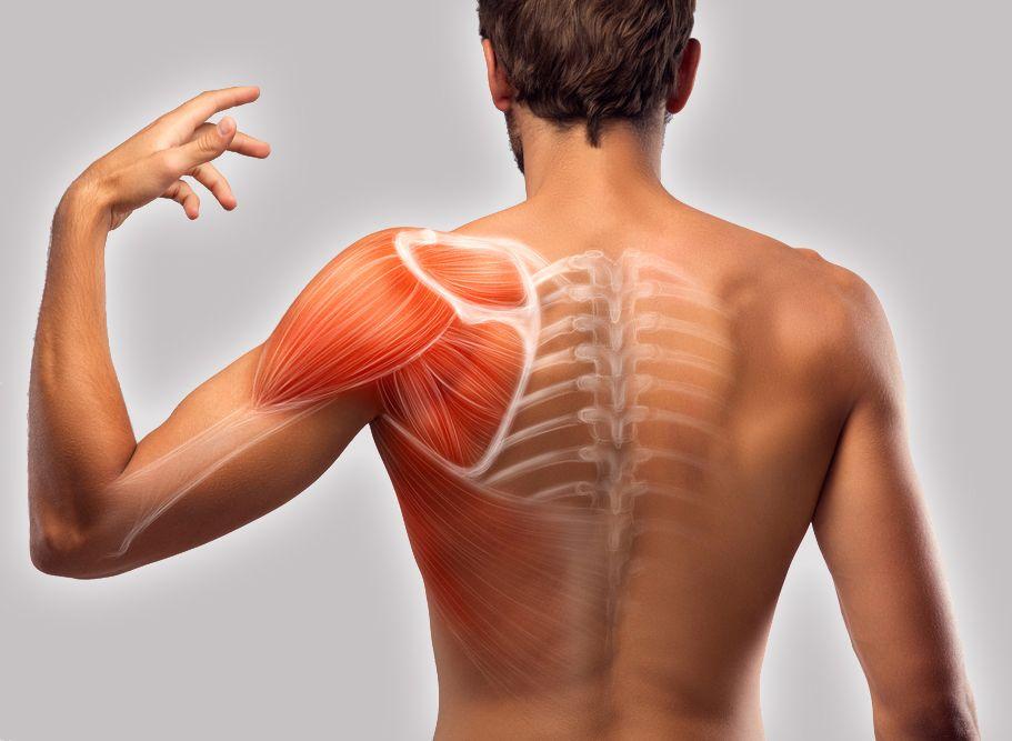 Đau khớp vai gây co rút cơ bắp, teo cơ, làm yếu các cơ