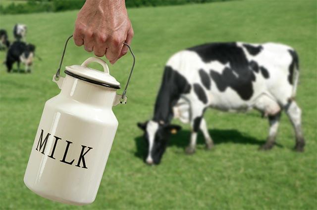 bị Gout có uống sữa được không