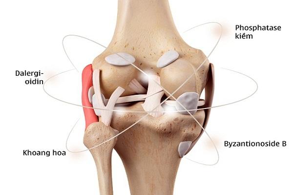 Cơ chế tác động từ căn nguyên gây viêm đau khớp của Hoạt huyết Phục cốt hoàn